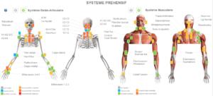 Système préhensif ; ostéo-articulaire et musculaire