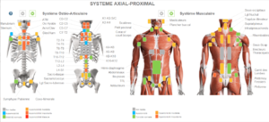 Système Axial proximal : ostéo-articulaire et musculaire