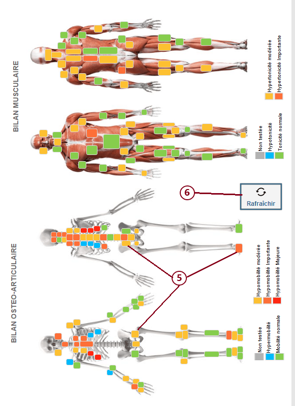 Bilan 3 : Schémas musculosquelettiques