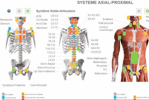 Saisie du diagnostique axial proximal sur le logiciel d'ostéopathie